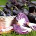 Користь фіолетових продуктів.