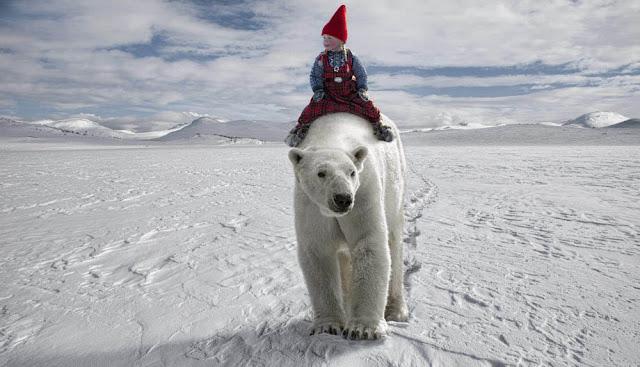 per breiehagen photos polar bear