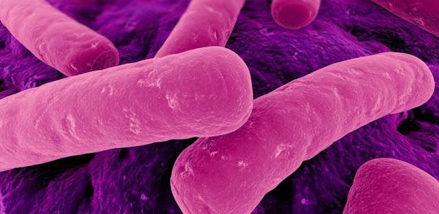 Peptidos y biologia