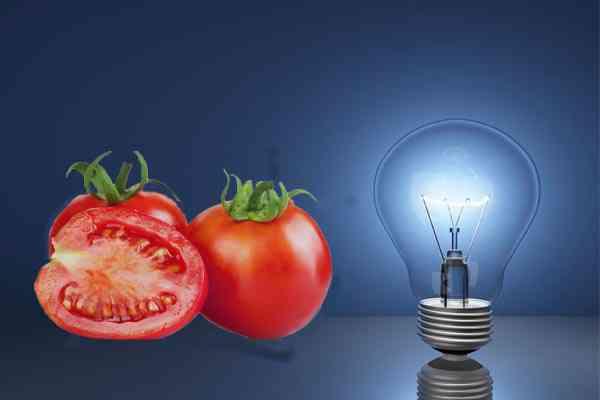 Tomat dan Listrik