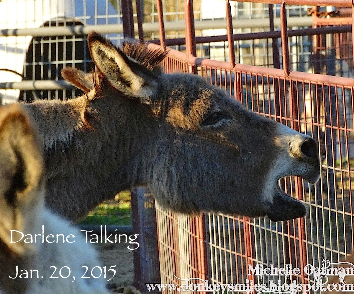 Talking with animals essay