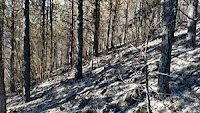 Изгоряла гора