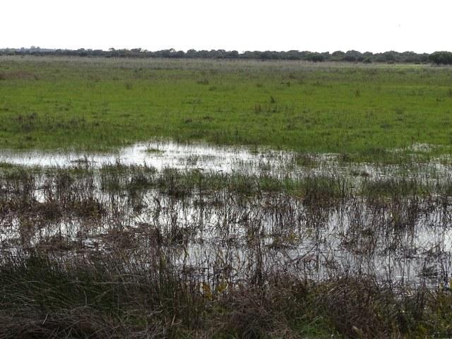 La Vera ecosistema Doñana agua