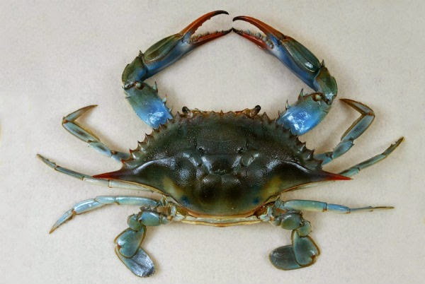 Myshare2us Can You Eat Crab Meat During Pregnancy