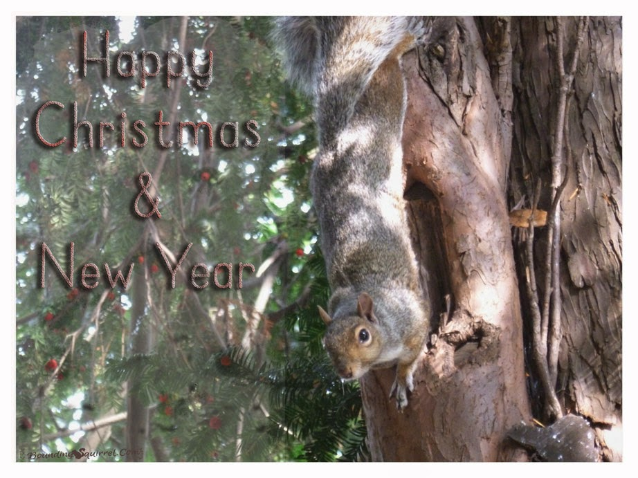 Squirrel Happy Christmas & New Year Ecard