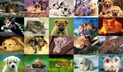 94 Gambar Hewan Beserta Nama Ilmiahnya Gratis Terbaru