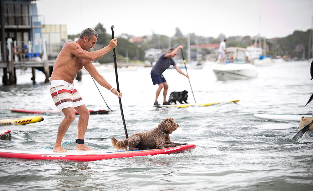 Two paddlers with their dogs lying on the boards
