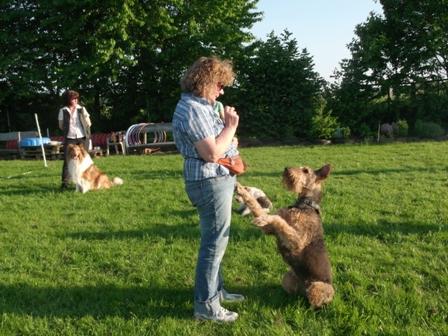 spielzeug hund mit leine