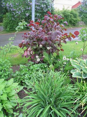 Sateinen sunnuntai ja kolme erilaista puutarhaa