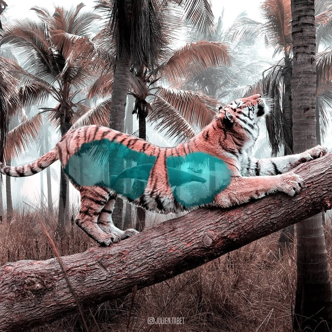 07-Tiger-and-Whale-Julien-Tabet-Animals-and-Architecture-Photoshopped-Surrealism-www-designstack-co