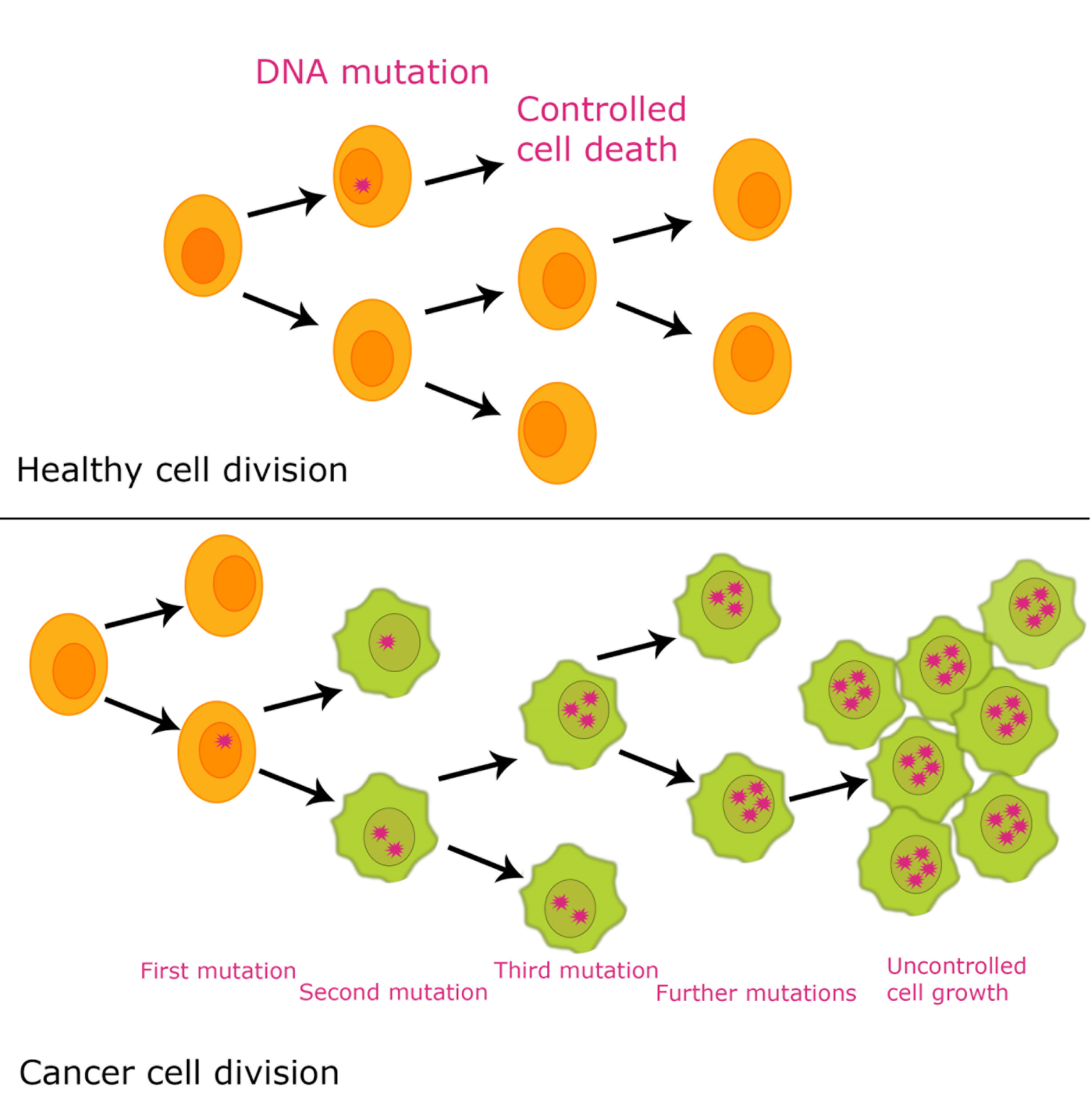 Nanotechnology Cell Division And Cancer