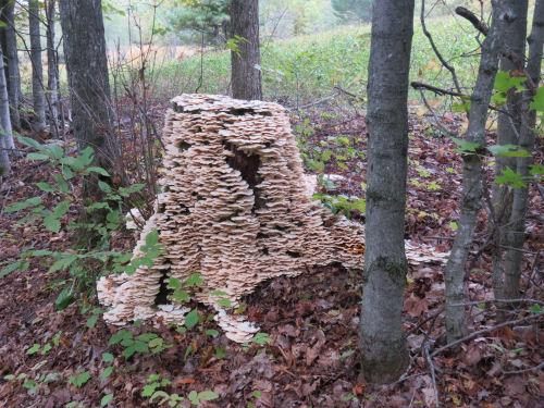 stump covered in mushrooms