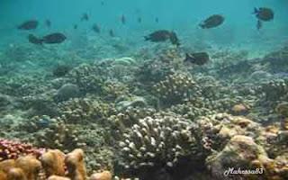 Pulau Banyak, Surfing Kelas Dunia Dari Aceh Singkil