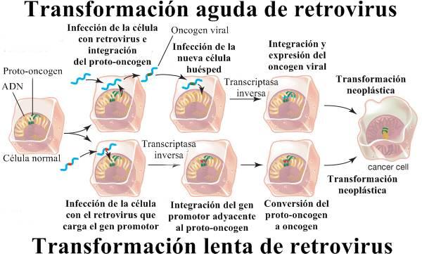 Retrovirus causantes de cáncer