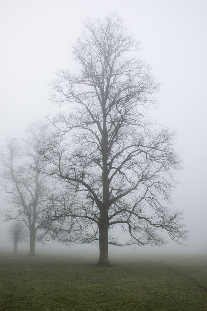 One of the Looming Trees in the Mist