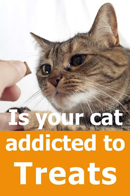 Is Your Cat Addicted To Treats