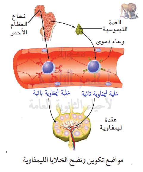 الجهاز المناعى - تركيب - أهم الأعضاء الليمفاوية - الغدة التيموسية - التيموسين - الخلايا التائية