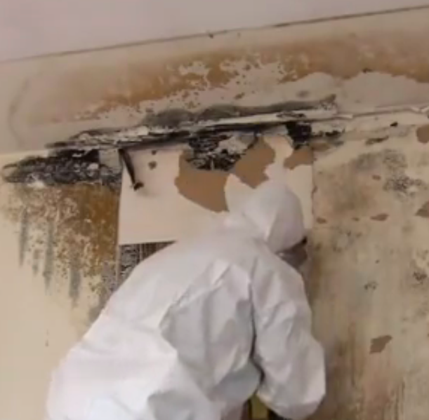 Above All Emergency Services Black Mold Removal And Home