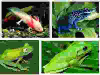92 Gambar Jenis Hewan Amfibi HD
