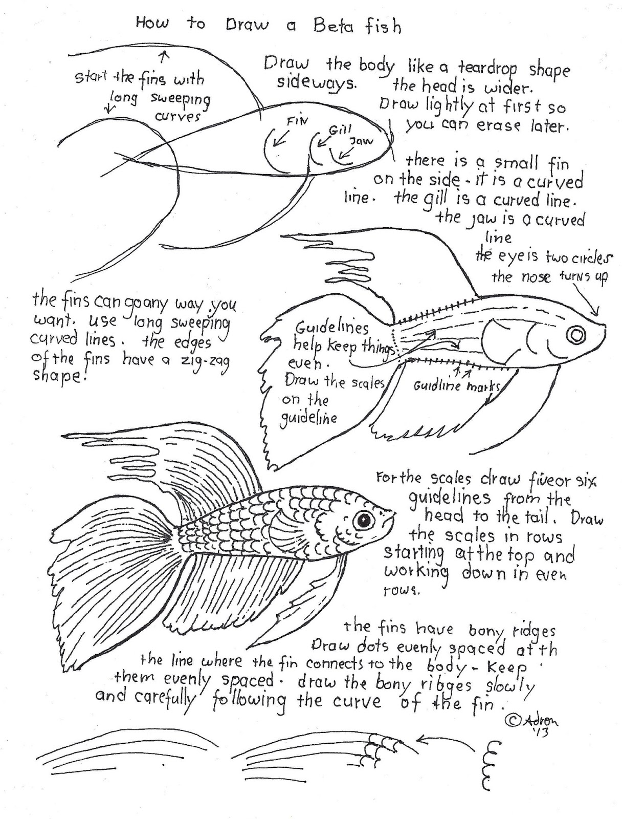 Uncategorized Fish Anatomy Worksheet how to draw worksheets for the young artist a beta fish worksheet