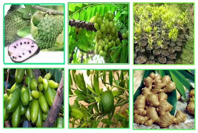 http://www.asalasah.com/2016/08/745-nama-tanaman-obat-herbal-lengkap.html