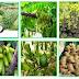 745 Nama Tanaman Obat Herbal Lengkap Dengan Manfaatnya