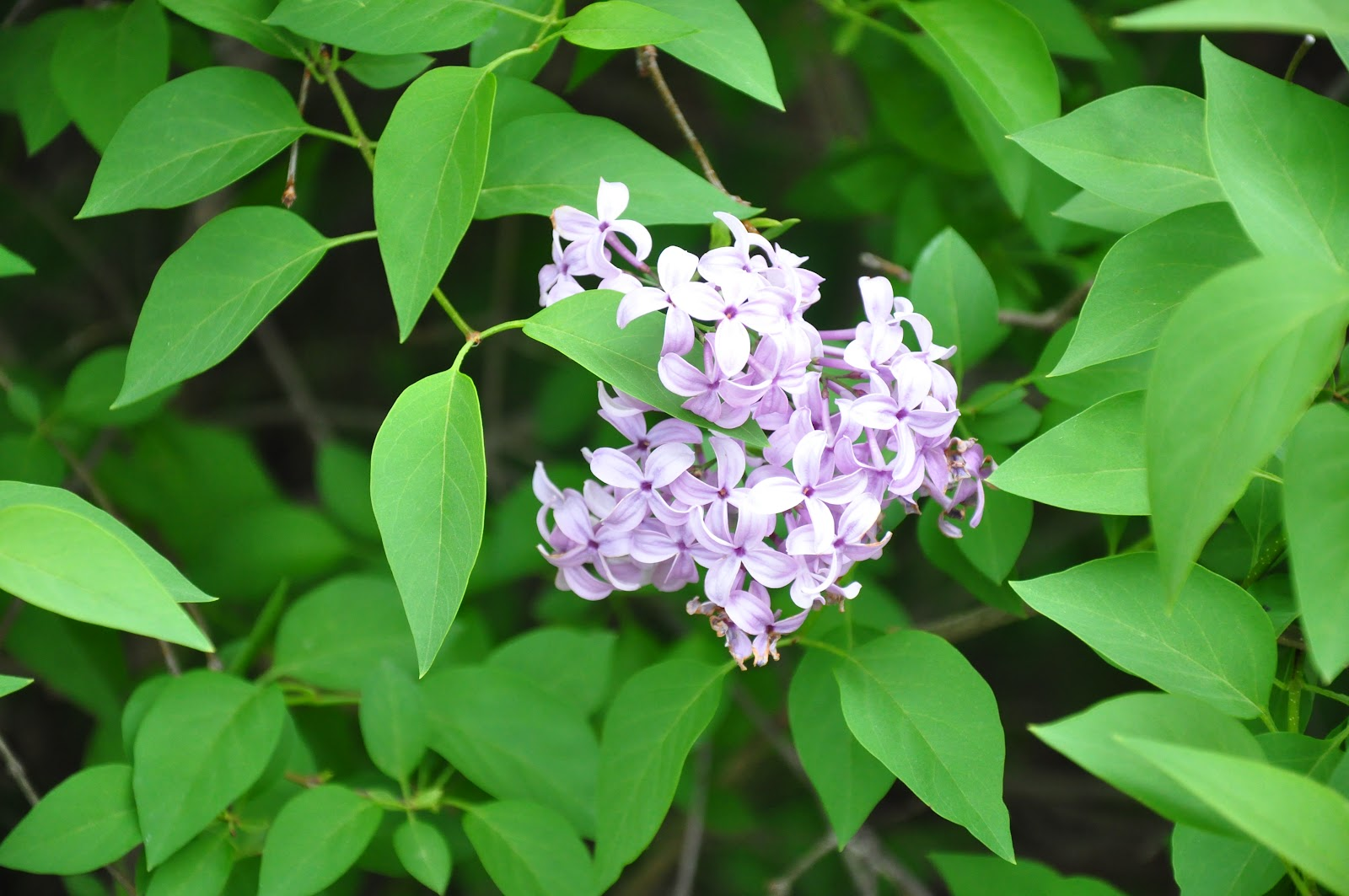 Frequently asked questions about LILACS