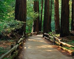 خلفيات مناظر طبيعية روعة  اشجار