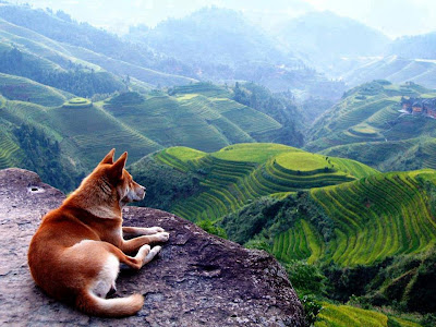 Dog at Banaue Rice Terraces