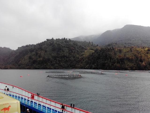 Salmoneras en Fiordo Comau, Chile