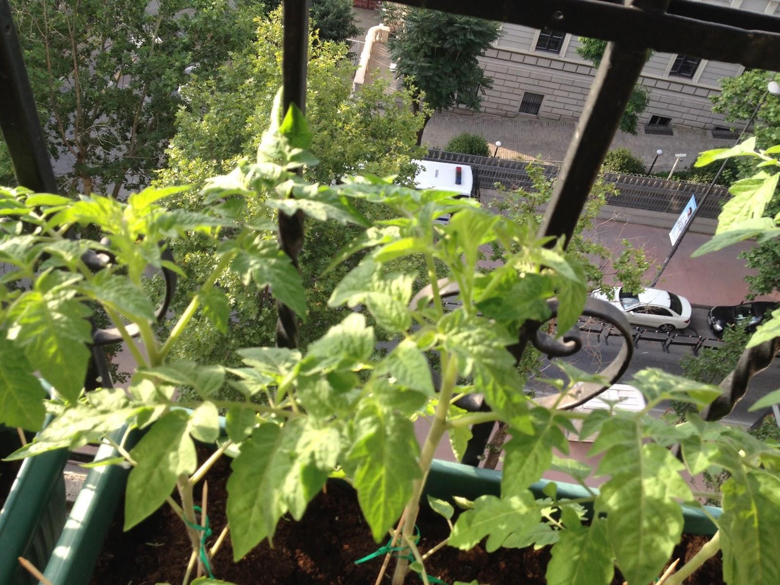 Faydalı ve pratik bir satın alma - sebzeleri balkonda saklamak için bir kutu