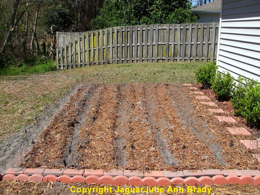 Digging 4 Rows for Sunflower Seeds by JaguarJulie 2014