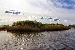 Danish nature per Thomas Rousing a Flickr