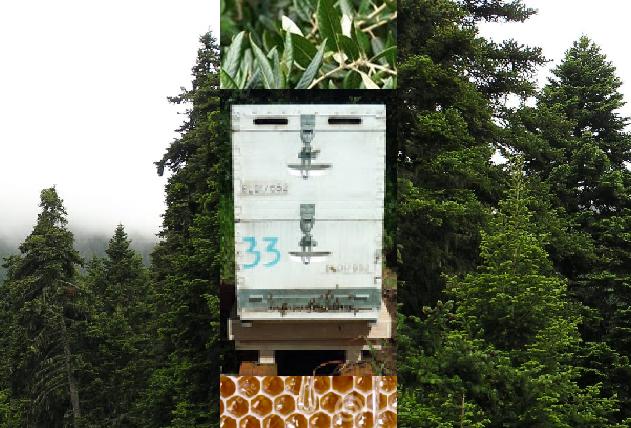 Τα νέα της ζυγαριάς της BeesScale στην Αριά και στον έλατο!!!