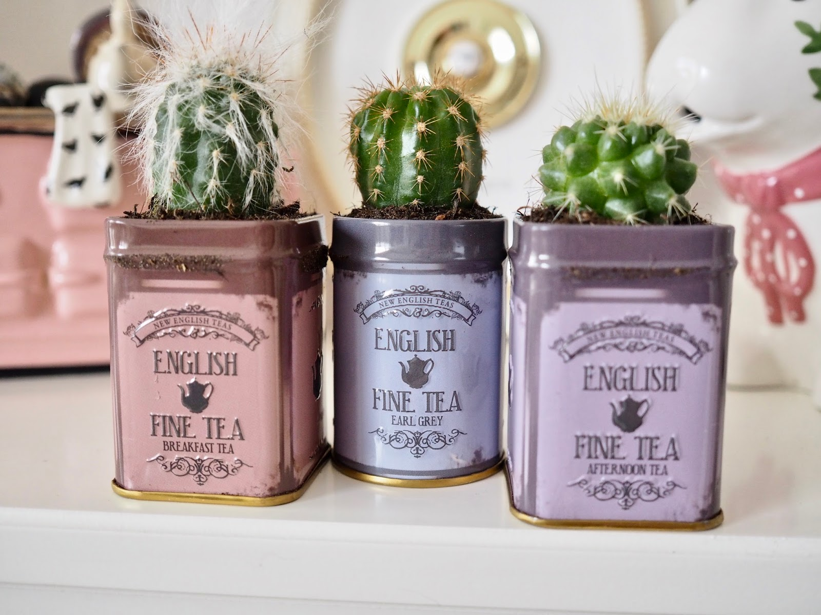 Tea Tins Planting Succulents In Old Tea Tins Dainty Dress Diaries