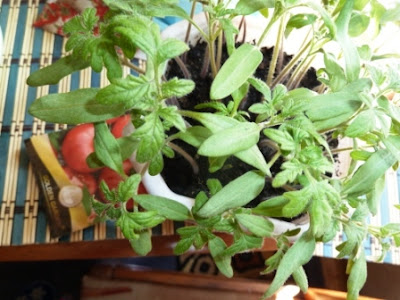посев помидоров в марте