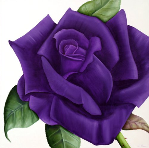 Purple Roses Background Images: HD WALLPAPERS: Purple Roses