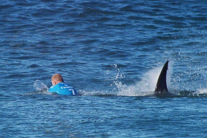 fanning tiburon
