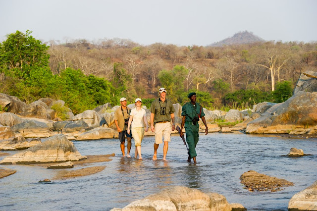 Southern Malawi safari