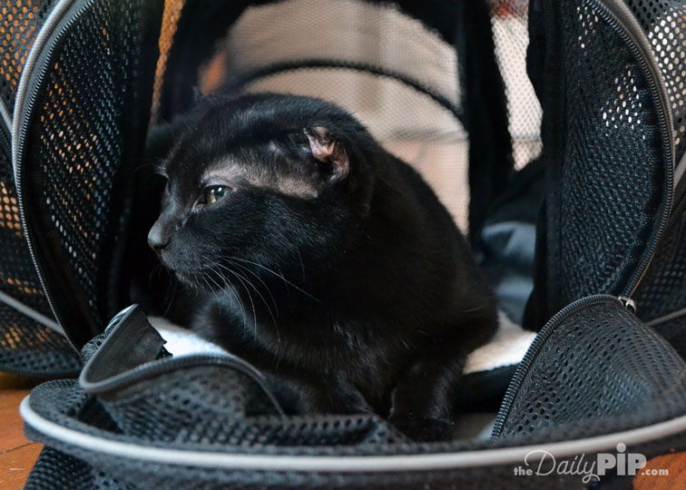 Smiling Paws Pets' Expandable Pet Carrier Giveaway