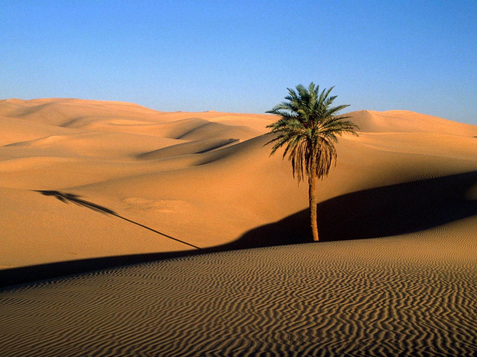 Over-all, when hot and cold deserts are combined, Sahara is the 2nd ...