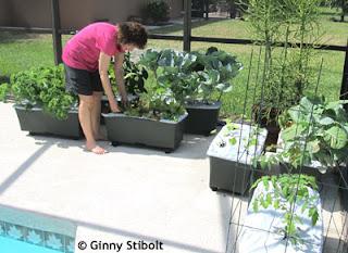 Ein essbarer Gartenarbeit Convert