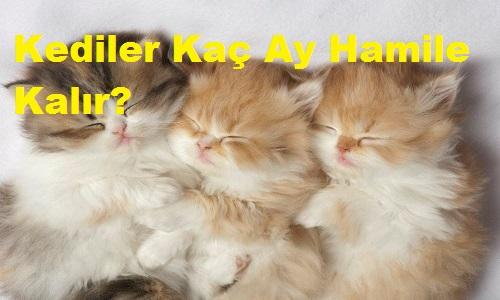 Kediler Kaç Ay Hamile Kalır?
