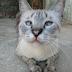 Dia 17 de Fevereiro - Dia Mundial do Gato