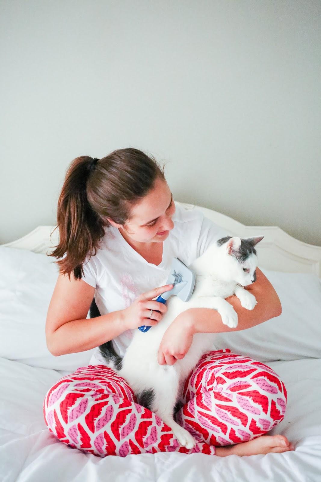Brunette girl wearing victoria's secret pajamas grooming her white elderly cat