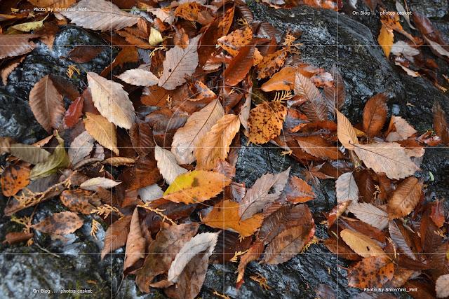 草木 枯葉 Autumn Leaves Bill Evans