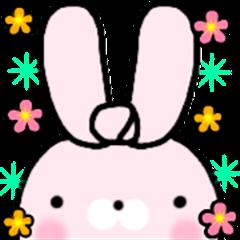 [shibausa] Bunny