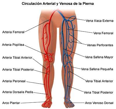 Pierna: Circulación Arterial y Venosa