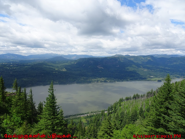 Columbia Gorge View - Angels Rest