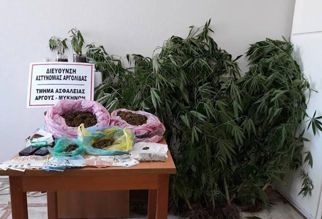 Συνελήφθησαν δύο άτομα με 11 δενδρύλια και 1,5 κιλό κάνναβη στην Αργολίδα
